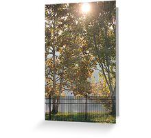 Sycamore Sunrise Greeting Card