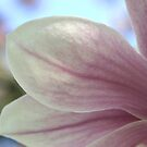 Magnolia Blossom &amp; Bokeh by Gene Walls