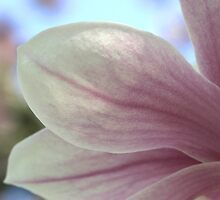 Magnolia Blossom & Bokeh by Gene Walls
