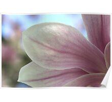 Magnolia Blossom & Bokeh Poster