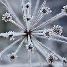 Crystallized by Penni