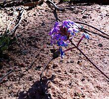 Bush Flower by Jock Anderson