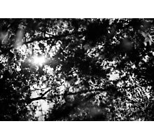The memory of trees Photographic Print