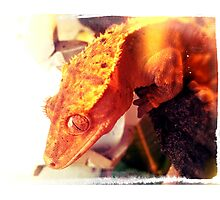 Crested Gecko Photographic Print