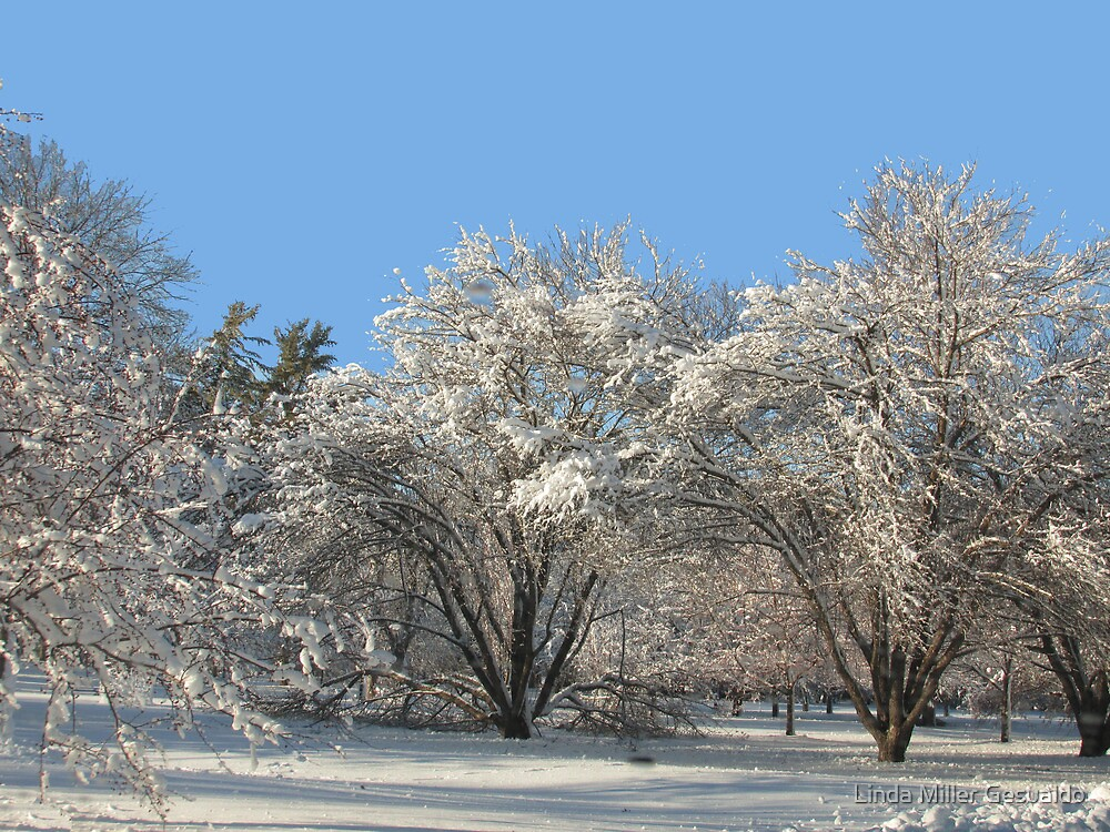 New Winter Trees by Linda Miller Gesualdo