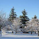 Winter in the park by Linda Miller Gesualdo