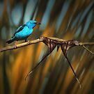 Bird and Emperor moth by jimmy hoffman