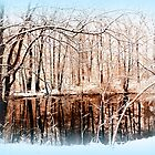 Winter Pond by The Creative Minds