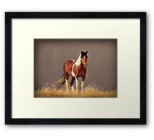 Paint Filly, Sepia Framed Print