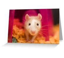 Fancy Rat Greeting Card