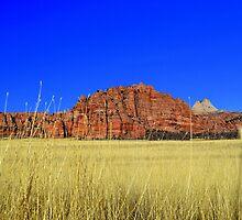 Kolob Plateau, Zion National Park by Michael Kannard