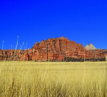 Kolob Plateau, Zion National Park by Michael Kannard
