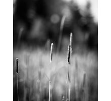 Grass field Photographic Print