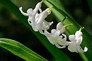 Tiny White Flowers (White Hyacinth) by Gene Walls