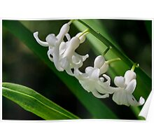 Tiny White Flowers (White Hyacinth) Poster