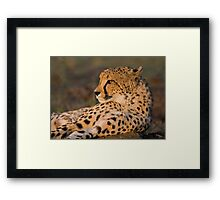 Rest And Watch Framed Print