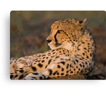Rest And Watch Canvas Print