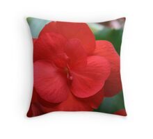 Ruby Red Begonia Throw Pillow