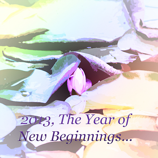2013, The Year of New Beginnings by Sherry Hallemeier