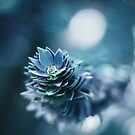 Monkey Puzzle  (iphone and ipod case) by BPhotographer