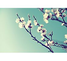 Spring bossom Photographic Print