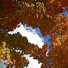 Autumn Leaves And Sky by Michael Kirsh