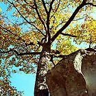 Autumn Tree and Boulder by Michael Kirsh