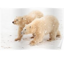 Cubs in the snow Poster