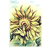 Sunflower and Swallowtail Photographic Print