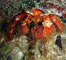 Hermit Crab by peterperry