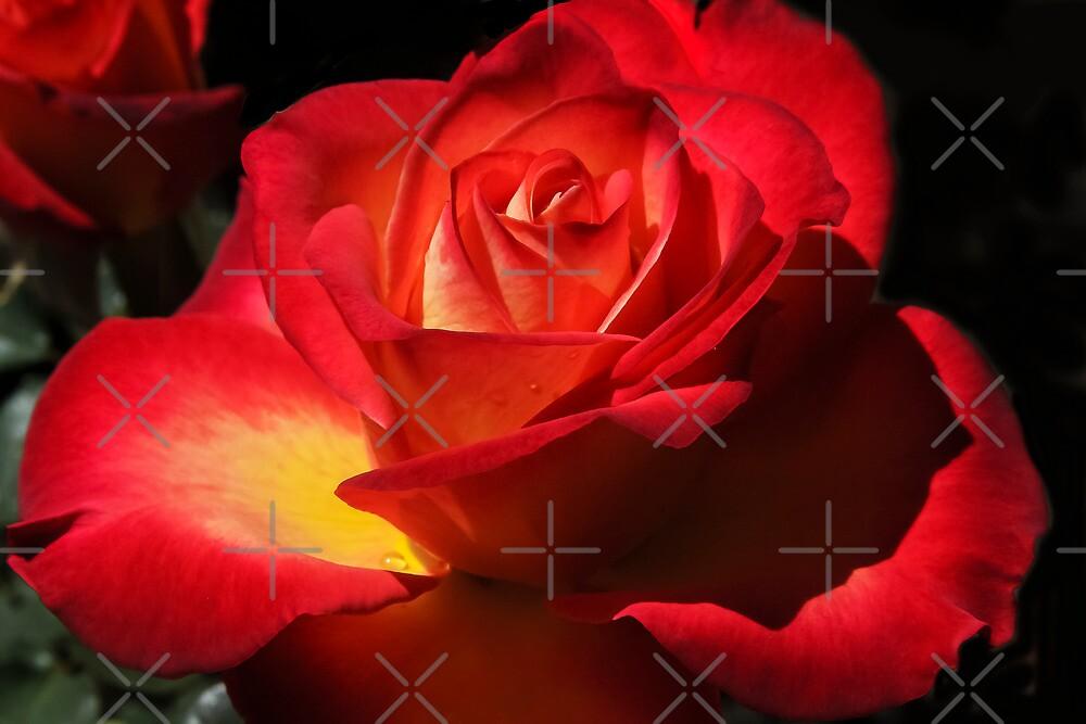 April Rose by Heather Friedman