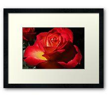 April Rose Framed Print