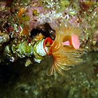 Sea flower. by peterperry