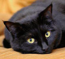 Miss Kitty's Eyes by Gene Walls