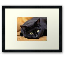 Miss Kitty's Eyes Framed Print