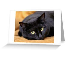 Miss Kitty's Eyes Greeting Card