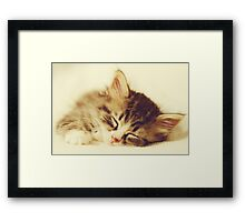 Content Kitty Framed Print
