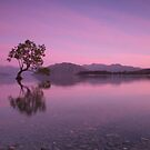Lake Wanaka Sunrise by Paul Campbell  Photography