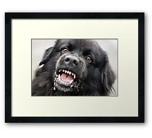 Give me that cookie, NOW!!! Framed Print