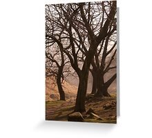 Dove Stone Trees Greeting Card