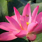 Bee.. by Lynette Higgs