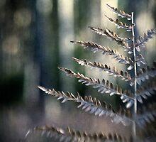 Winter Fern by Nicola Smith