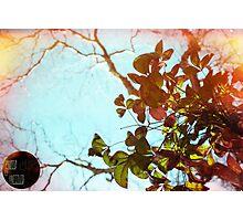 light leak leaves Photographic Print