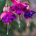 Purple Flower by Daniel Rankmore