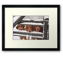 Trio Of Goofy Golden Retrievers Framed Print