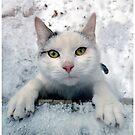Cat by jankolas