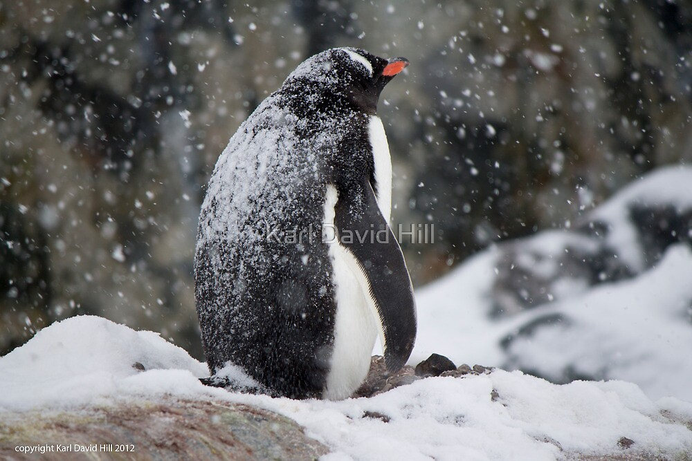 Penguin 001 by Karl David Hill
