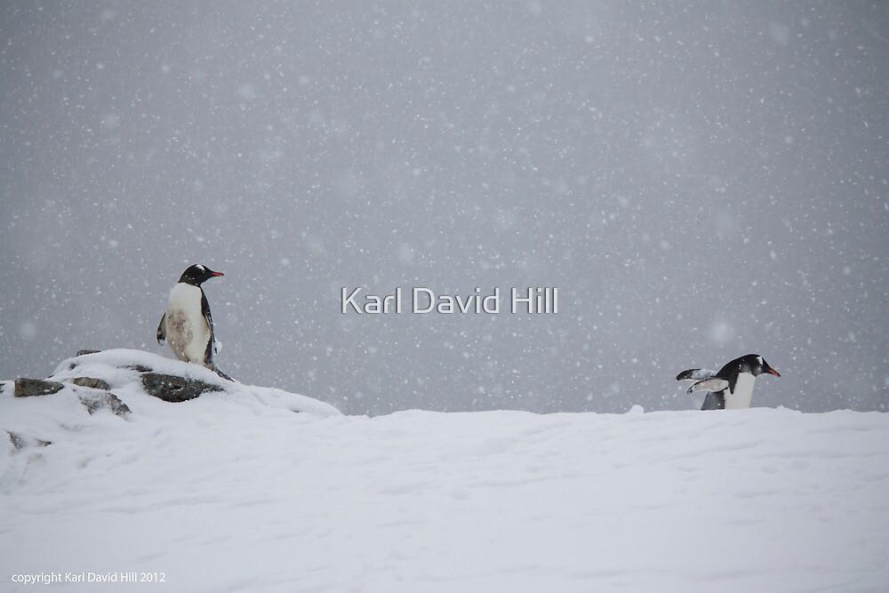 Penguin 003 by Karl David Hill