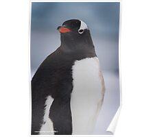 Penguin 004 Poster