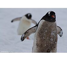 Penguin 005 Photographic Print